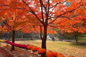 Mùa lá đỏ Hàn Quốc2